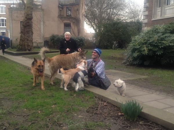 dogs dogs dogs dogwalkers joy